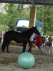 Un cheval facétieux
